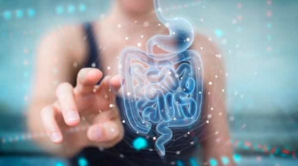 Benefícios para o Intestino